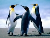 penguins_0